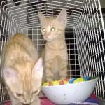 Aris e Alizia