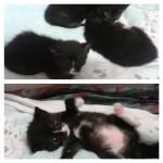 Tre micini adottati!