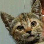 Sofia adottata!