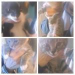 Quattro micini di tre mesi adottati!