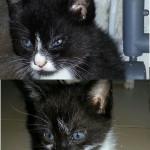 Fratellino e sorellina neri e bianchi di due mesi adottati!