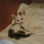 Bagheera adottata!