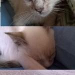 Minù, Chicco e Mia adottati!