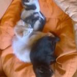 Mica, Ignazio e Bianca adottati!