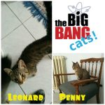 Leonard e Penny adottati