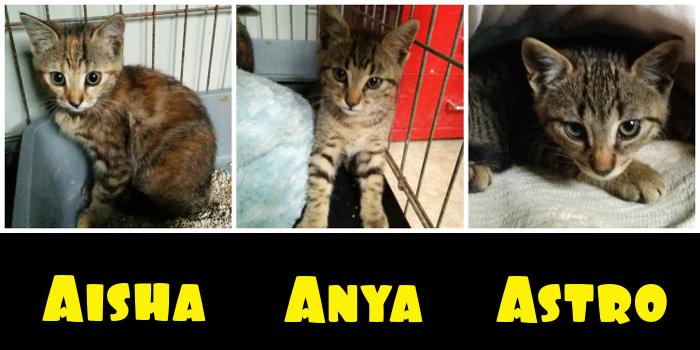 Aisha, Anya e Astro