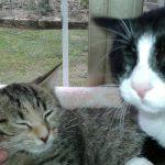 Franchino e Kate adottati!