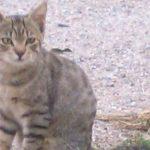 Novi: micina tigrata di cinque mesi adottata!