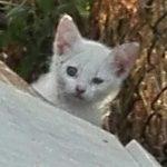 Maschio bianco