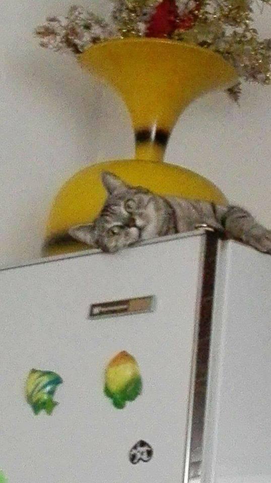 Questa gattina tigrata di circa un anno, sterilizzata, è stata smarrita a Mirandola nei pressi della gastronomia Franciosi sulla statale nord. È una gattina abituata a vivere in casa: chiunque avesse sue notizie e l'avesse trovata può contattare Patrizia al 349 308 56 85.