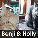 Benji & Holly cercano casa urgentemente!