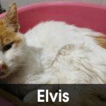 Elvis ci ha lasciato…