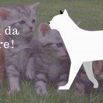 Gatti e gattini da adottare