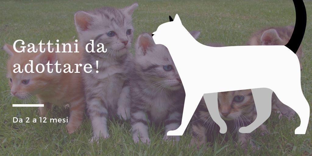 Gattini_da_adottare