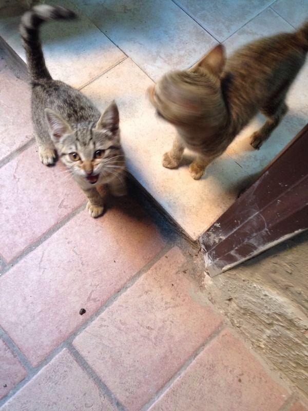 Gattine di tre mesi