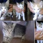 Cinque micini adottati!
