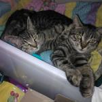 Jessica & Leo adottati!