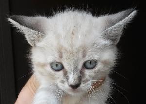 Moglia: bellissimi micini i due mesi adottati!