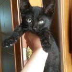 Moglia: sei micini di due mesi adottati!