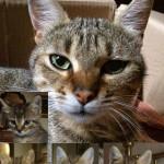 Gattini adottati, ma la mamma cerca ancora casa!