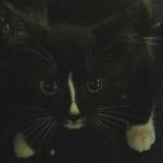 Willy adottato!