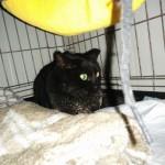 Micia nera deceduta il 2 gennaio