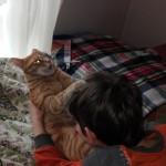 Gatto rosso smarrito vicino Hotel Pico