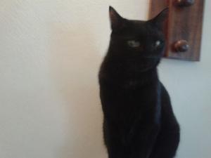 Gatto nero Luciana