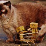 Aiuto! Serve cibo di qualità per i gatti!