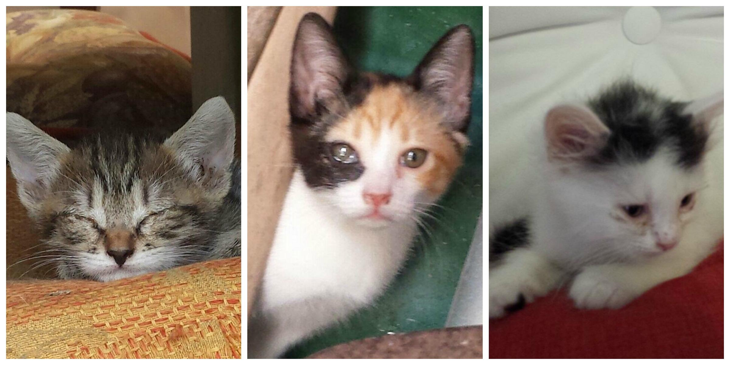 I gattini di Cinzia