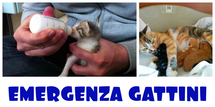 Emergenza gattini