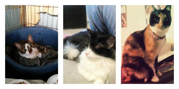Bea, Kira e Pippi
