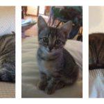 Luna, Minù e Rosita adottate!