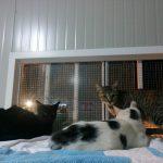 Marisol, Raphel e Selina