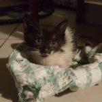 Casaleone: gattina piccolina adottata!