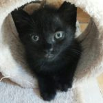 Casaleone: micino nero adottato!