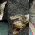 Gattine di due mesi adottate!