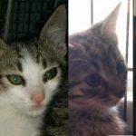 Oscar, Giada, Rocco adottati!