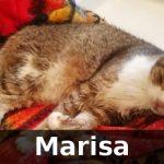 Marisa adottata!