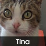 Tina adottata!